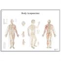 Εικόνα της Xάρτης βελονισμού σώματος