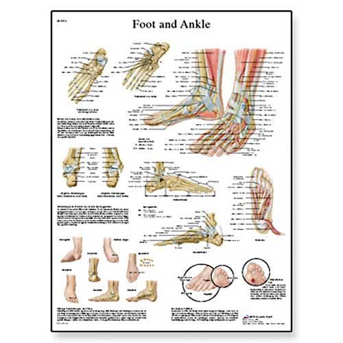 Σκούρας. Foot and Joints of Foot Chart - Anatomy and Pathology