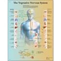 Εικόνα της Χάρτης αυτόνομου νευρικού συστήματος